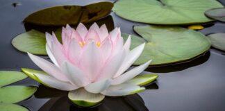 Stres Yönetimi İçin Mindfulness ve Aromaterapi