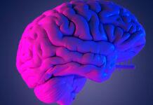 Nörobilim ve İkna Arçelik Eğitimleri